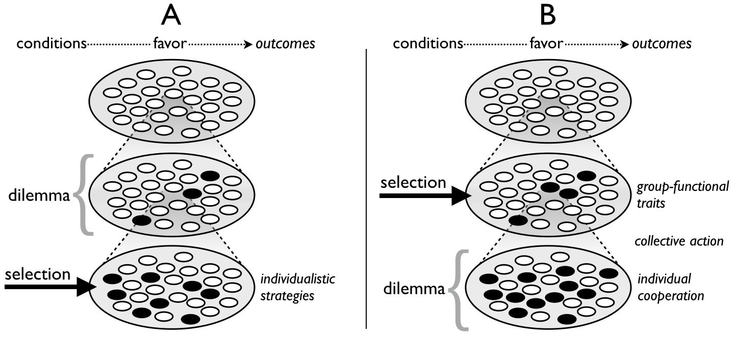 Fig. 2. The cultural multilevel selection(CMLS) framework
