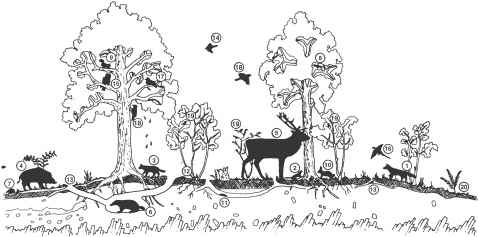 The woodland ecosystem food chains food webs and the plant