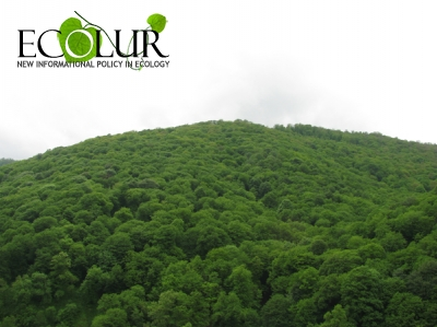 Help the planet (and save yourself some money) by celebrating earth day. How World Forestry Day Was Celebrated On 21 March Ecolur