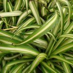 8 Indoor Plants That Absorb Humidity Ecomasteryproject