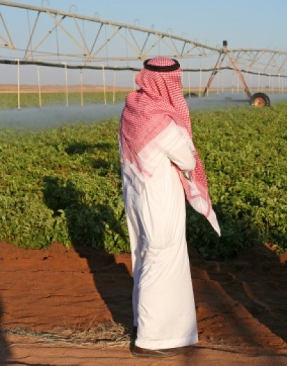 drip-irrigation-uae