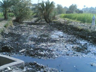 Water Scarcity In Egypt Ecomena