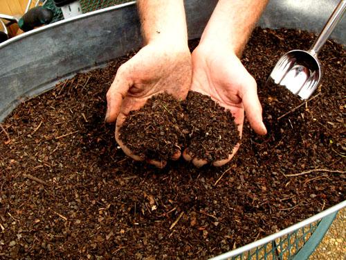 Easy Ways to Make Organic Liquid Fertilizer | EcoMENA