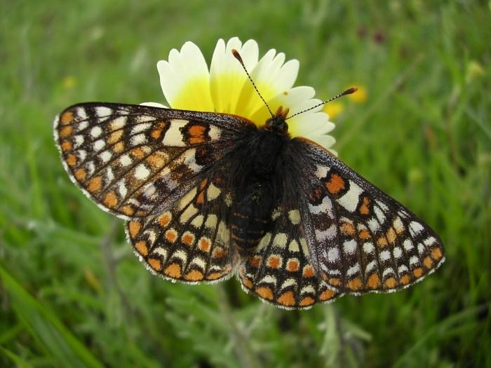 biodiversity_jordan
