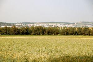 agriculture-mena
