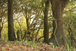 forestjordan
