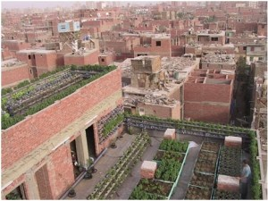 Al-Zawya Al-Hamra green roof farms