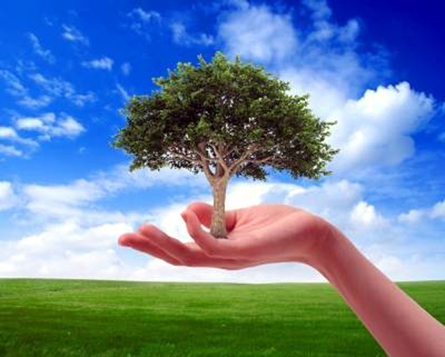 eco volunteer