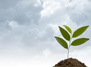environment-education-arab