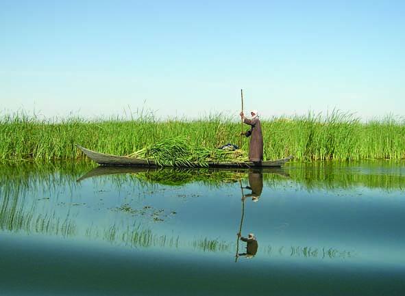 wetlandsarab