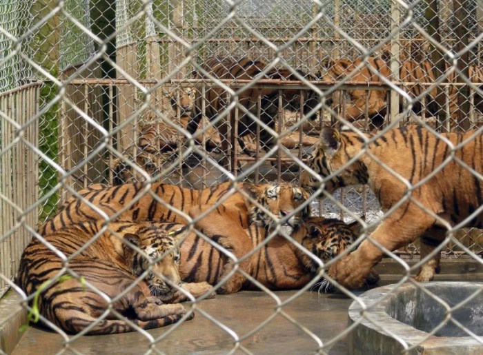 Wildlife trade is a serious conservation problem worldwide