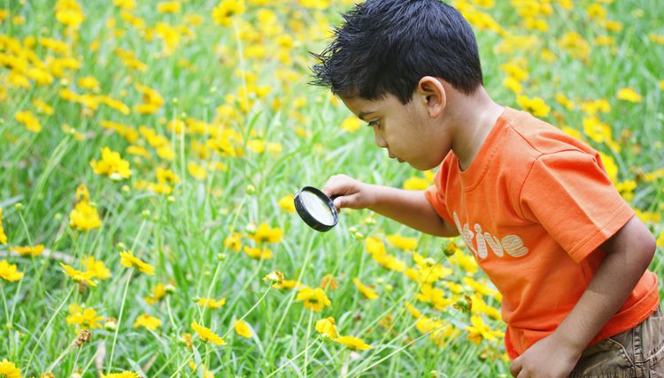 Tips for Better Environmental Education | EcoMENA
