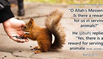 Islam And Animal Rights Ecomena