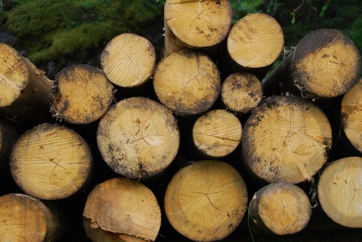 Wereldwijd kernenergie en wij stoken hout