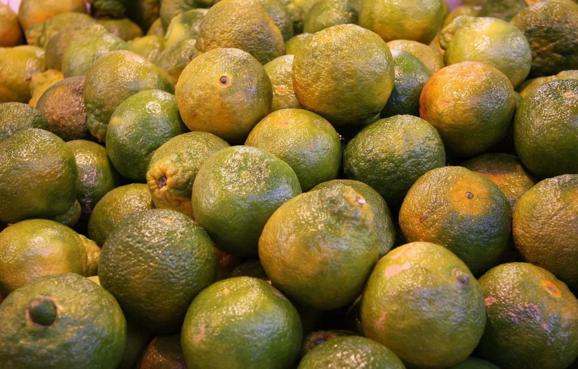 pourquoi peut on manger des oranges ou