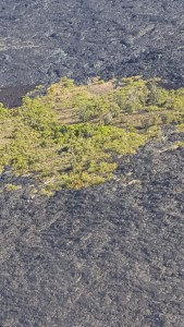 Vegetation and lava