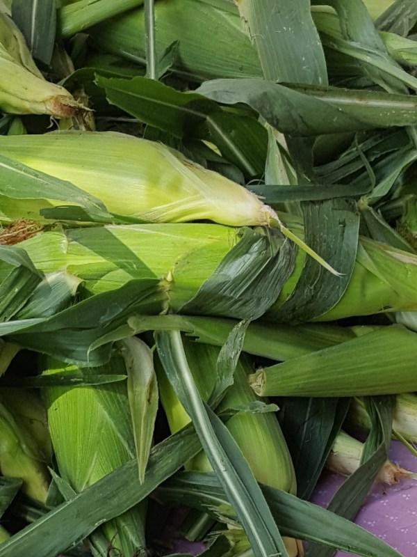 Ears of corn.