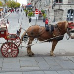 A Belgian Draft Horse standing before a carriage.
