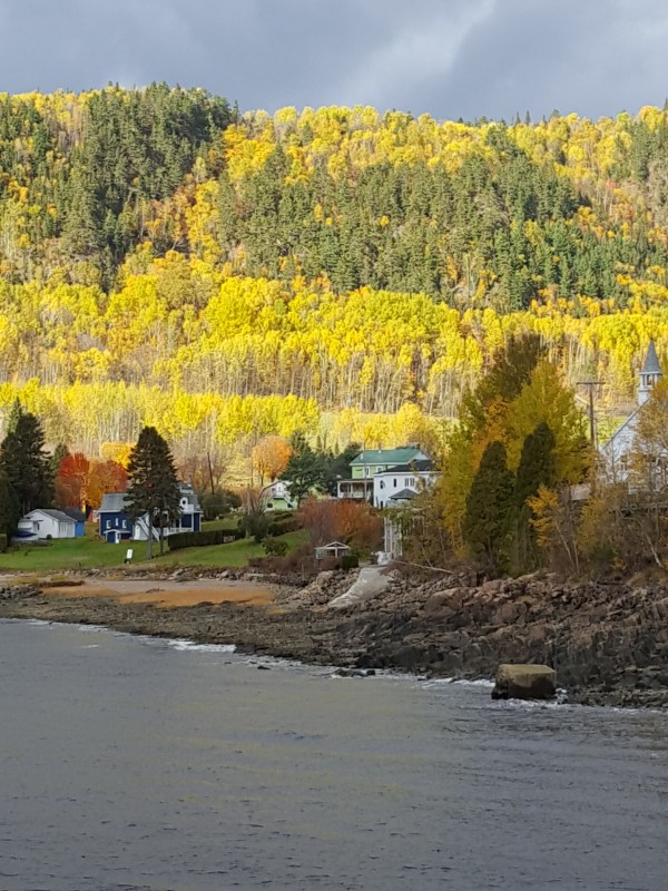 Fjord in foregraound with fall trees in background