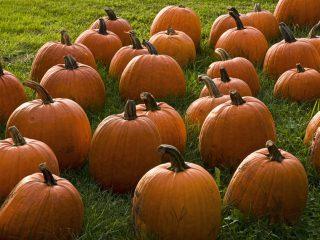 The 5 Best Healthy Pumpkin Recipes