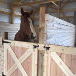 How To Build A Dutch Stall Door Cheap Diy Stall Door