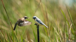 Speciation – How female selection creates new species |  Science technology