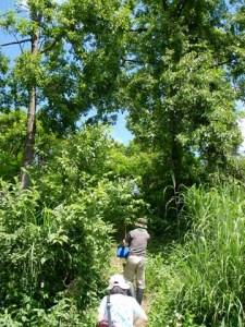祐子さんの畑へ続く小道。物語の場面のような風景です。