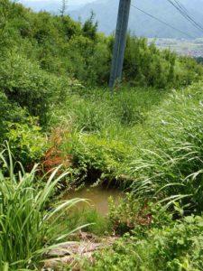 祐子さんの畑の水を汲む場所です。