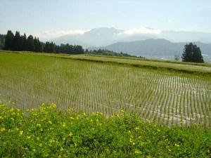 棚田オーナーの田んぼ(手前)から、北東方向を望む。正面が八海山(1,778m)。