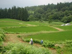 ワラビ採りをした田んぼ。まわりは林に囲まれていて、ひとつの「世界」のような場所です。