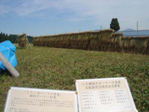 刈り取りが終わって天日干しが行われているオーナー田んぼ。1反余りの田んぼで、4段がけにして長さ30メートルほどの稲が収穫された。