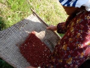 小豆をあおっているところ。3回くらいあおってはごみを拾い、またあおっては拾い…その度に小豆がおいしくなっていくような気がしました。