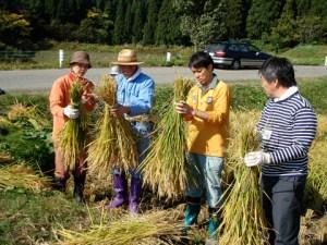 集落の日熊さん(左から2人目)に稲の束ね方を教わる。稲刈りでは、刈り取りよりもこの束ね方が大事な作業。