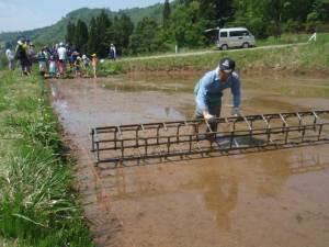 最初に大きな枠を転がして田んぼに線を引きます。