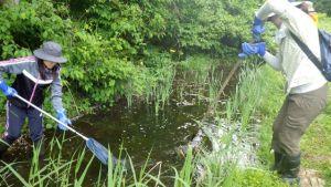 ビオトープ内の藻を除去し、これからますます活動する生き物が住みつきやすい環境に整備します。