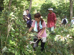 ナメコの原木周辺。うっそうと生える草を草刈り機を使って刈る。