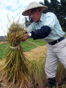 A Villager taught how to bind straw in sheaves to a participant.
