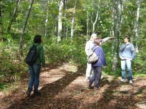 一桧山のブナの森を歩く参加者のみなさん。樹高20メートル前後の巨木が並ぶ見事な森でした