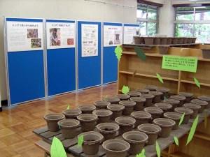 展示室は中央に120のドングリ入りの植木鉢が並び、その周辺を20枚近い説明パネルが囲んでいます。