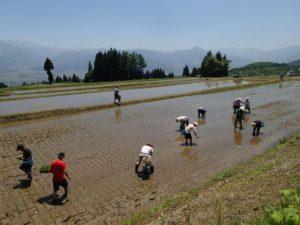 気温30度近く。6月始めとは思えない暑さの中で田植えをします!