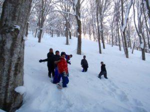 かんじきをはいて、雪に覆われたブナ林を進みます。