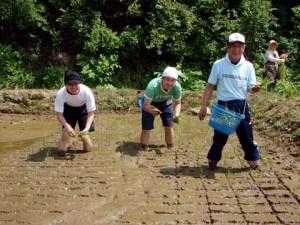 以前田植えに参加し、手慣れている参加者もいました。