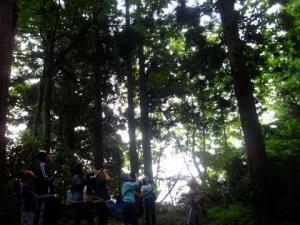 針葉樹と広葉樹が混ざった林の中。キビタキやコゲラ、ウグイスの鳴き声がすぐ近くで聞こえました。