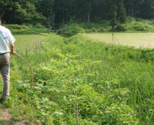 栃窪の「三大水源」と呼ばれるわき水のポイントのひとつ。