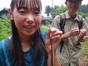 濡れた草の上を移動していた小型のヘビ「ヒバカリ」。小さな頭と紫がかった茶色の肌が印象的。無毒。