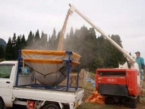 コンバインの中に貯められたモミは、大きな管を通して直接専用の容れものに積まれていました。