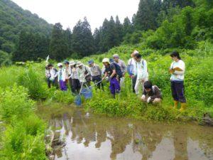 西谷後の池を調査している様子。池の中の黒い斑点は、オタマジャクシです。