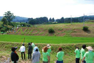 昨年に引き続き参加した長岡造形大学のみなさんの作品。右側にトキの頭が描かれている。