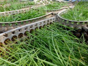 田植えを待つポット苗たち