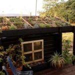 6 Sencillos Pasos para hacer un techo verde